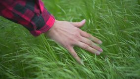 Female hand touches the grass in slow motion at sunset close-up. Slow motion. The concept of human unity with nature stock footage