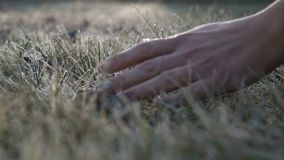 The female hand touches to a frosty grass on a background light of the sun stock video footage