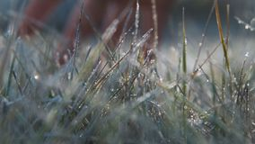 The female hand touches to a frosty grass on a background light of the sun stock footage