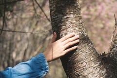 Female hand touching big tree stock photo