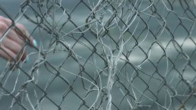 Female hand touching fence mesh with dry plant stems during walk on street stock footage