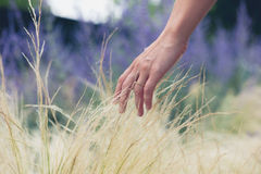 Female hand touching grass Royalty Free Stock Image