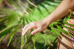 female hand is touching a palm branch stock image