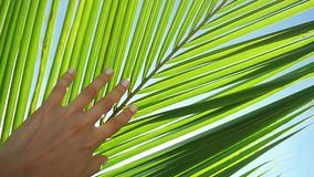 Female hand touching palm leaf and the sun. Girl enjoying bright tropical sun with lens flare effects in slow motion. Female hand touching palm leaf and the sun stock footage