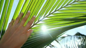 Female hand touching palm leaf and the sun. Woman enjoying bright tropical sun with lens flare effects in slow motion. 1920x1080, hd stock footage