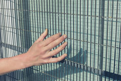 Female hand touching wired fence Royalty Free Stock Photography
