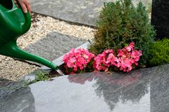Female hand is watering flowers at a cemetery. Female hand is watering flowers on a grave at a cemetery Royalty Free Stock Photos