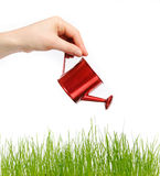 Female hand holding a water can and watering grass. Female hand watering green grass. Hand holding a red water can. Background is white Stock Photos