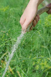 Female hand watering plants Royalty Free Stock Photo