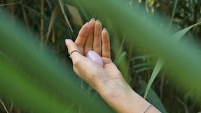 Free Female Hand With French Manicure Holding Pink Quartz Pink Yoni Egg For Vumfit, Imbuilding Or Meditation. Crystal Gem In Stock Photo - 158423300