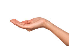 Female Hand. Woman's hand on a white background Stock Photography