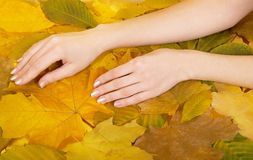 Female hands against leaves Stock Photo