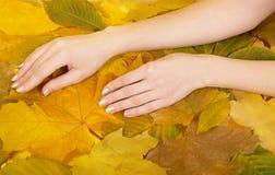 Female hands against leaves Stock Photo