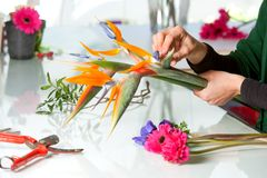 Female hands arranging bouquet. Stock Photos