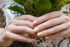 Female hands with beige nail design. Female hands with beige nail design holding flowers Royalty Free Stock Photo