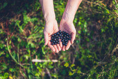 Female hands with black currants Royalty Free Stock Images