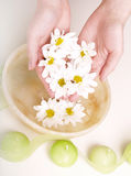 Female hands in bowl full of water. And flower Royalty Free Stock Photography