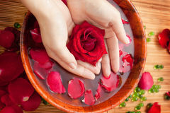 Female Hands in Bowl of Water with Red Rose. Spa Salon: Beautiful Female Hands with French Manicure in the Bamboo Bowl of Water with Red Roses and Rose Petals on Royalty Free Stock Images