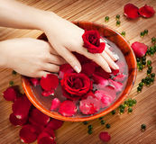 Female Hands in Bowl of Water with Red Roses. Spa Salon: Beautiful Female Hands with French Manicure in the Bamboo Bowl of Water with Red Roses and Rose Petals Royalty Free Stock Image
