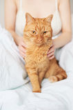 Female hands caress cat Royalty Free Stock Photos