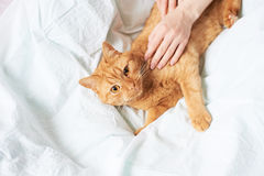 Female hands caress cat Stock Photo