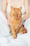 Female hands caress cat Royalty Free Stock Images