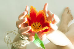 Female hands connected by an old rope. The opened female hands connected by an old rope with a red tulip inside Stock Photos