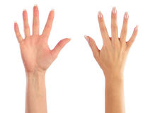 Female hands counting. Number 5 Royalty Free Stock Images