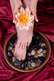 Female hands and feet Royalty Free Stock Images