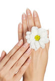 Female hands with flower Stock Images