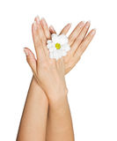 Female hands with flower Stock Photo