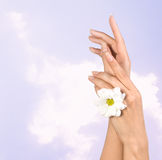 Female hands with flower Royalty Free Stock Photo