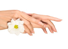 Female hands with flower Stock Photos