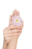 Female hands with flower Royalty Free Stock Photography
