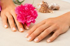 Female hands with flower. Royalty Free Stock Photos