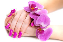 Female hands with fragrant orchid . Spa Stock Image