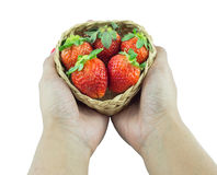 Female hands full of organic strawberries in wicker basket Stock Images