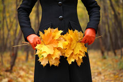 Female hands in gloves with yellow leaves Stock Photography