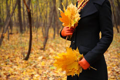 Female hands in gloves with yellow leaves Royalty Free Stock Photo