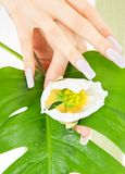 Female hands with green leaf and flower Stock Image