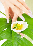 Female hands with green leaf and flower Stock Photo