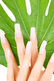 Female hands with green leaf Royalty Free Stock Photos