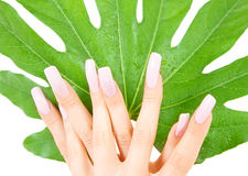 Female hands with green leaf Stock Images