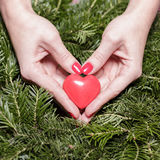 Female hands with heart on fir branches. Valentine Day. Female hands with decorative heart on background of fir branches. Valentine Day royalty free stock images