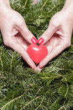 Female hands with heart on fir branches. Valentine Day. Female hands with decorative heart on background of fir branches. Valentine Day royalty free stock photo