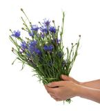 Female hands hold an armful of flowers Stock Photo