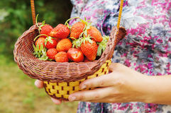 Female hands hold a basket with strawberry Stock Photo