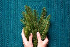 Female hands hold branches of fir tree on a blue knitted background. Christmas concept. Top view Royalty Free Stock Photo