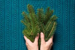 Female hands hold branches of fir tree on a blue knitted background. Christmas concept. Top view Stock Photography