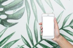 Female hands hold mobile phone with white screen on a tropical background stock photos